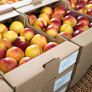 le carton ondulé pour le transport des fruits et légumes